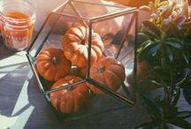 pumpkin chill season yes