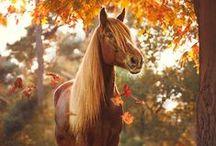Pferdewelt / Die facettenreiche Lebenswelt der Pferde bietet romantische Einblicke in eine geheimnisvolle Welt.