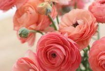 Красиво  / Цветы