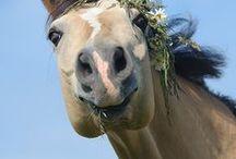 Pferdespaß / Die witzigsten Grimassen der Pferde sorgen für Lachgarantie.
