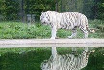 Zoo da Maia / Parque Zoológico da Maia.