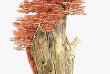 Gyöngy bonsai