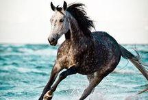 Summer feeling / Sonne, Strand und Meer: Romantische Augenblicke in der Natur mit unseren Seelenpartnern, den anmutigen Pferden.