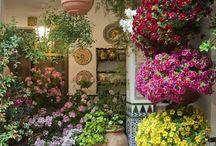 Virágos teraszok