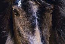 Pferde-Impressionen / Hier zeigen wir euch Pferde verschiedener Rassen aus den unterschiedlichsten Blickwinkeln, die jede Menge Emotionen ausdrücken.