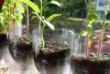Repot / plant pots