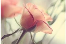 Flowers photography