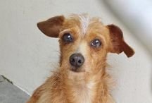 Adoptable and Death Row Pets
