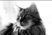 Katzencontent / Alles für die Katz!