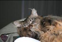 cat Bert / ;