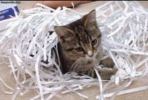 strefaniszczarek.pl / Niszczarki - Paper shredder. Ideal, EBA, Opus, Fellowes, HSM - najnowsze fotki urządzeń biurowych