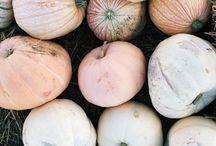 October / Fall scenes, pumpkins