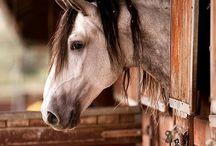 Horses / by Wim Peeters