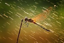 Insects / by Wim Peeters