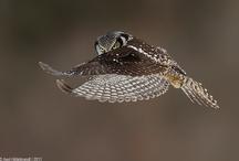 Owls / by Wim Peeters