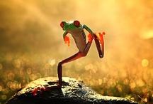 Frogs / by Wim Peeters