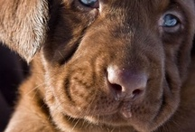Dogs and puppies / animals / by Karen Sirman