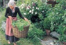 High-Altitude Gardening