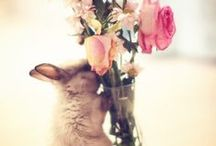 Bunny / ~For Bunny Lovers~