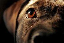 Photography - Animal World