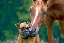 Dogs & Horses /   / by Susan Hutchens Steel