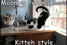 Cat Funnies.... / by Jen B.
