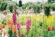 Secret garden / by Motoko Sasaki