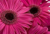 flowers / by Rj Kerchal