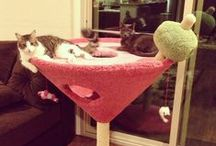 Fun things for Mylo and Jazzie to play and climb on.