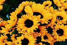 Love me some Sunflowers