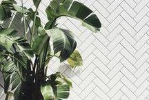 | Botanical | / Plants, cactus & fern inspiration