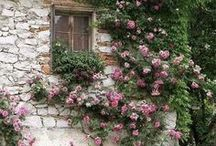 romantically inspired... / by Gloria