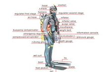 Fun facts about scuba & the oceans! / Fun facts about #Scuba diving, the sea, #underwater life, #oceans