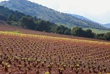 Primavera 2013 / Borsao cuenta con 2.430 hectáreas de viñedos, situada en el Noreste de la provincia de Zaragoza con una producción de 9.5 millones de Kilos.  Durante el verano la zona tiene influencia Mediterránea, es decir cuenta con altas temperaturas.  Las extremas temperaturas y un amplio contraste térmico, día-noche, verano-invierno, ayuda a conseguir buena acidez, un bonito color y agradables taninos en los vinos.  La Baja pluviometrica, una media de 350 – 450 mm favorece el desarrollo de la vid.