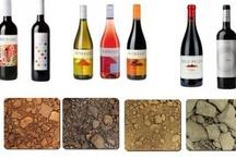 Diversity of Soils/ Diversidad de suelos