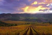 Wonderful Tuscany  / Because Tuscany is always wonderful!