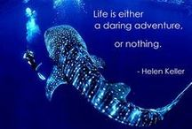 We di(v)e for these quotes / At Scuba Professionals, we think, breath and live for Scuba Diving. Enjoy!