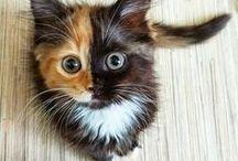 Cats / Cute cats!