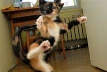 Cats rule the interwebz