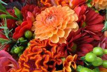 Automne en fleurs