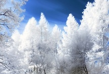 Winter Magic / I realized that putting all the seasons into one pin category was too much!  So here is winter, in all of its glory!  Dealing with the cold is worth it when you are surrounded by this kind of beauty! / by Jan Arnold