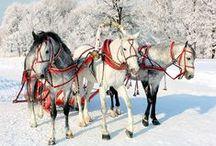 Equestrian Christmas