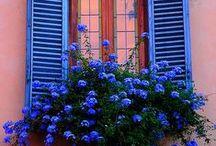 Primavera / Flor e cor