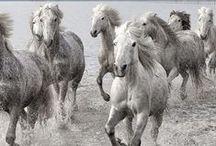 Cavalos / O bicho mais lindo do mundo