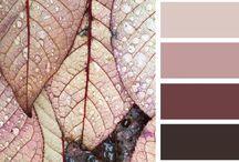 Palette / Color Inspiration