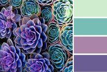 beloved colors