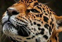 Leopard♥ / Leopard Love
