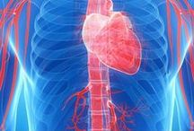 HEART and Blood Vessels / The board looks at the heart and circulatory system. It includes topics on heart, blood vessels, high blood pressure and vascular insufficiency.  / by Dynamic Health Journeys