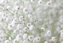 Monde Végétal / La Nature crée de si beaux êtres