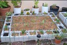 Digging into gardening / by UK Health & Wellness